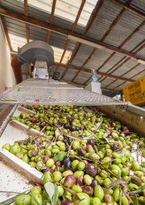 Agroindústria e agricultura